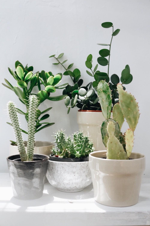 Boleh tahu tanaman favorit kamu  Tanaman favorit saya adalah kaktus dan  sukulen. aadf83f739