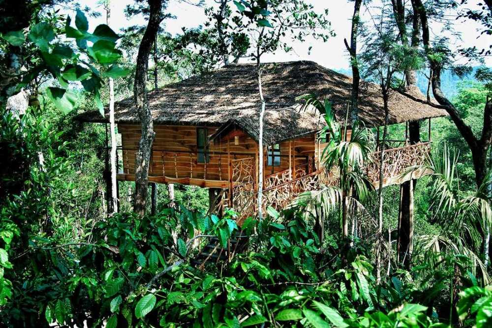 Rumah Pohon di Perkebunan Kopi