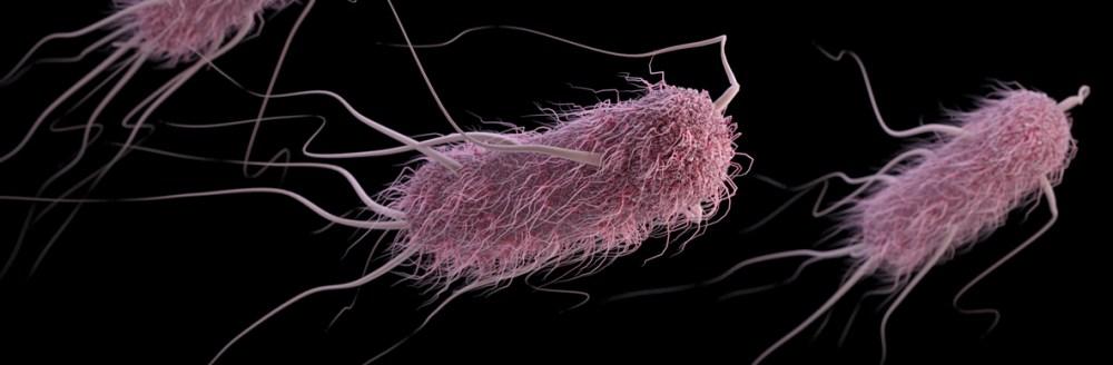 tampak dekat bakteri e-coli