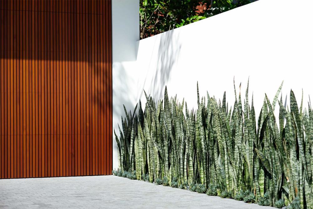 Taman Rumah Minimalis dengan Sansevieria