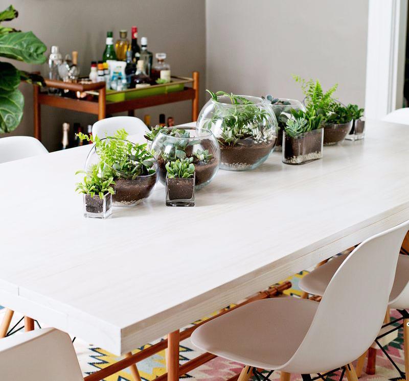 Tanaman Meja Makan
