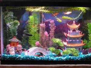 7 ide hiasan aquarium cantik yang murah meriah