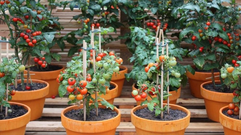 sayur dan buah di kebun