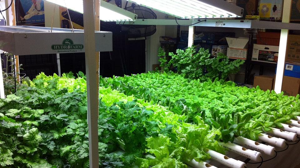 Kebun Sayur Hidroponik