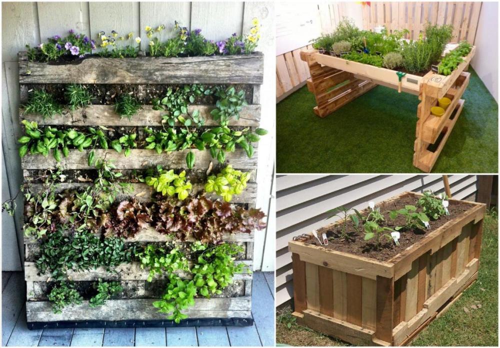 Kebun Sayur Pallet