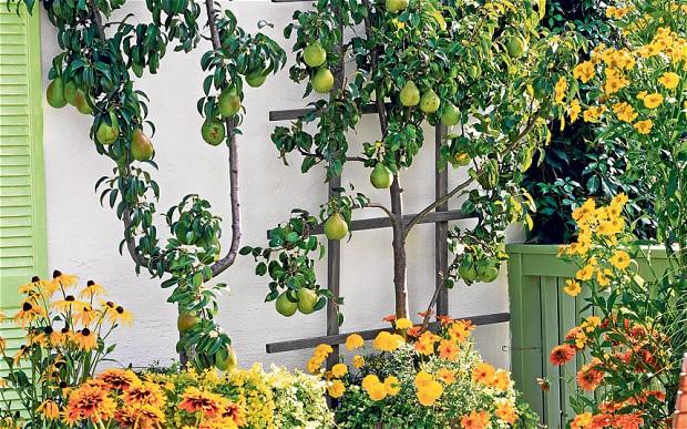 kebun buah