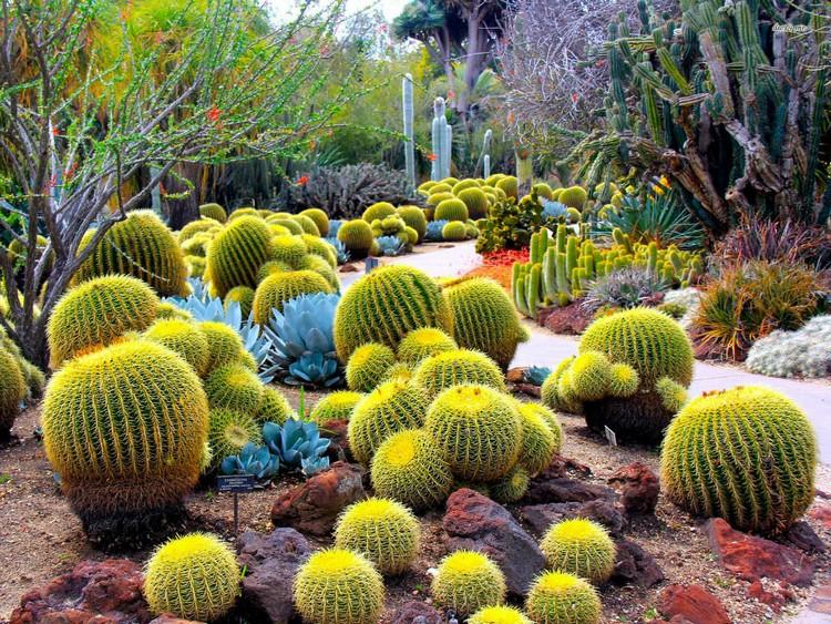 Memilih jenis kaktus yang tepat luar ruangan