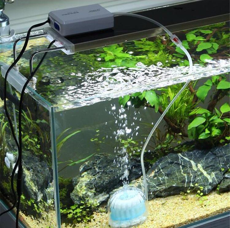 ini caranya menyiapkan akuarium ikan idaman untuk pemula rh dekoruma com