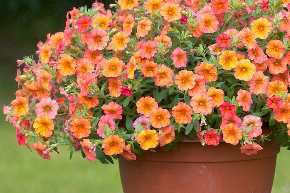 10 Jenis Bunga Hias Gantung Ini Bisa Ceriakan Suasana Rumah