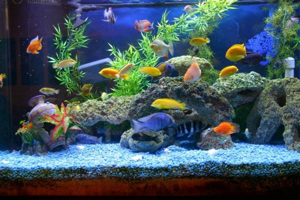 Memasukan Ikan di Akuarium