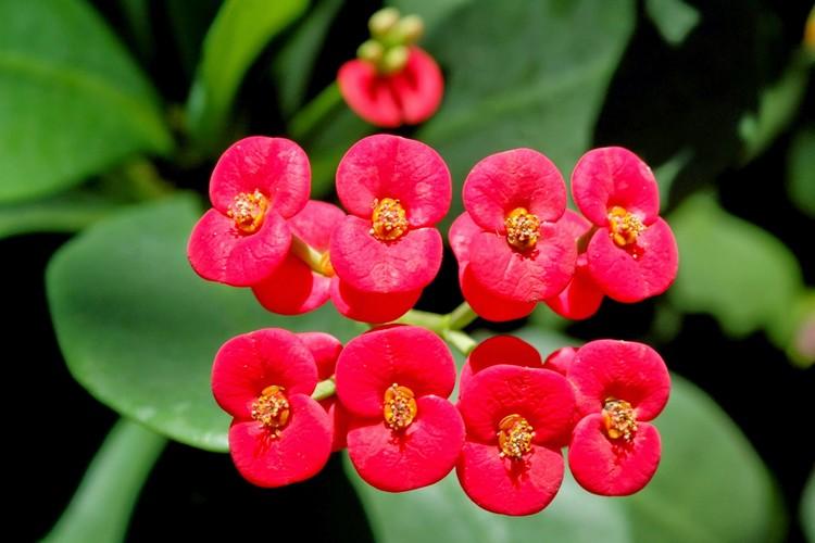 Bunga yang Cocok Ditanam di Daerah Tropis