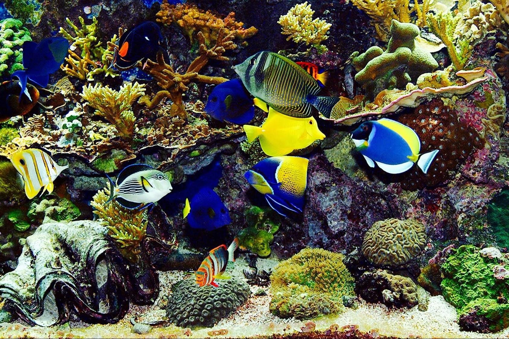 Jenis Ikan Hias Air Laut Gambar Ikan Laut Ingin Memiliki Akuarium Air Laut Pahami Dulu 7 Hal Berikut