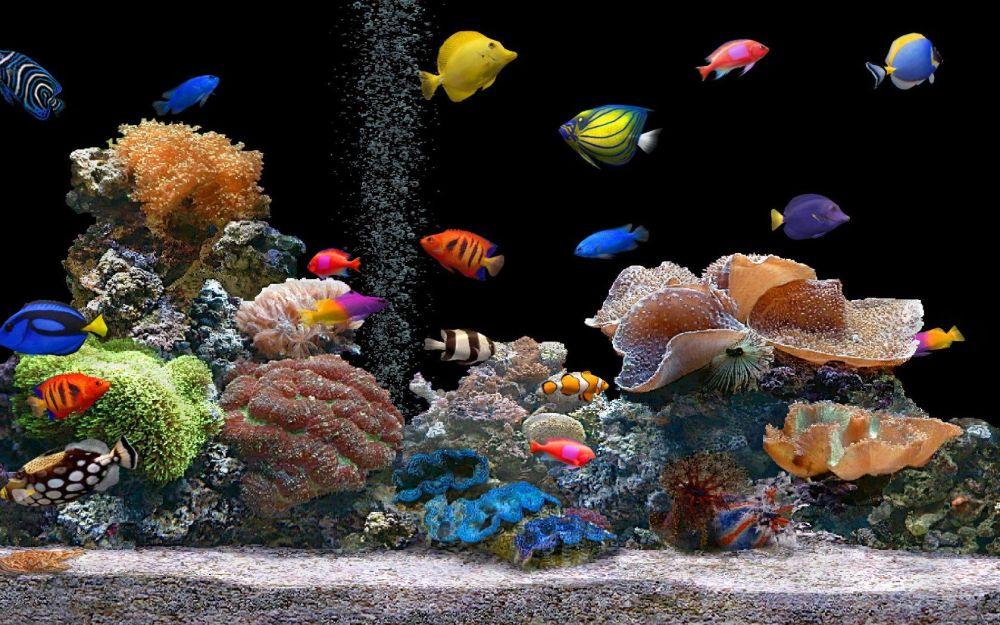 koral dan ikan akuarium air laut