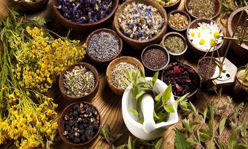 diabetes tanaman berkhasiat obat