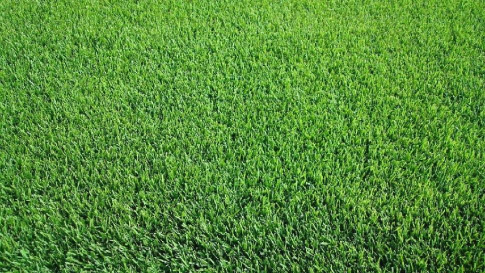Jenis Rumput Manila untuk Taman Rumah