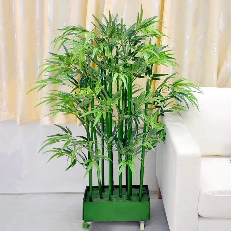 Bambu Hias Tanaman Dekor Yang Dipercaya Membawa Hoki