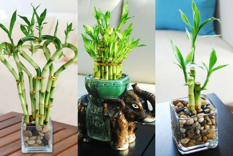 Bambu hias juga bisa jadi tanaman dalam ruangan