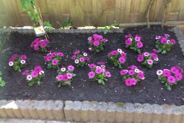 bloemen 20 april 2018