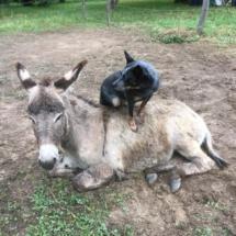 Blue et son âne