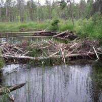 El extraño caso de la ardorosa defensa del Medio Ambiente