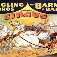 El maravilloso circo del derecho público
