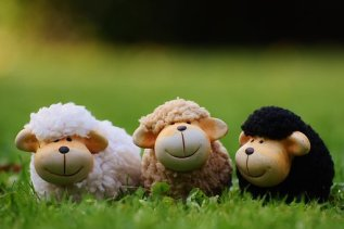 sheep-1642874__340