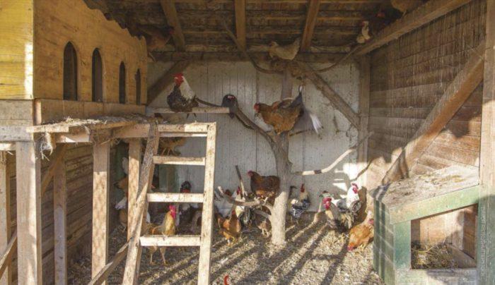 Chicken coop enrichment