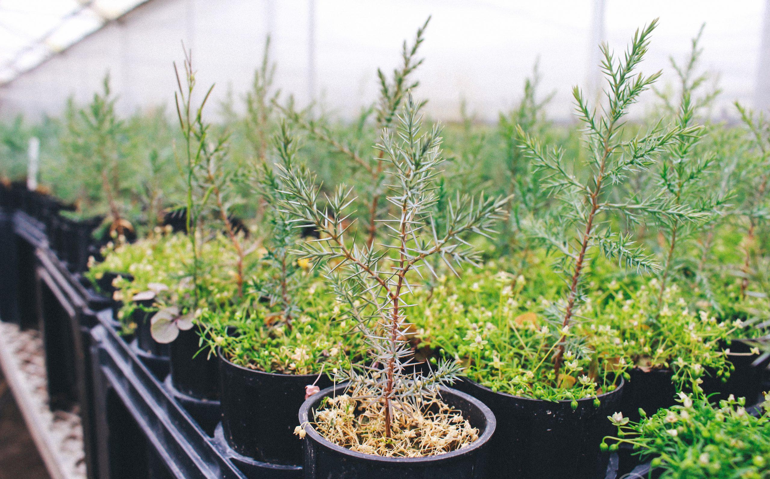 Kweken van bomen