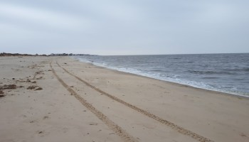 Broadkill Beach Lost A Lot Of Sand And Beach Plum Looks Great