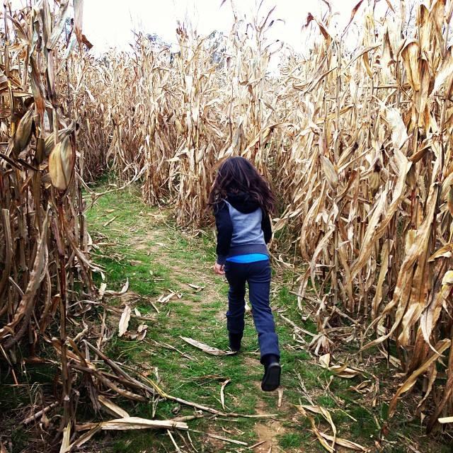 Delaware corn mazes