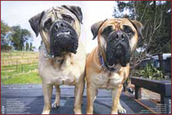 Our late friend Taser and his pal Tallulah, Wine Dogs USA