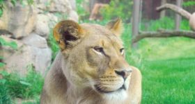 """Philadelphia Zoo's New FREE Virtual Classroom """"Philly Zoo to You""""Brings the Zoo Experience Right into Your Home"""