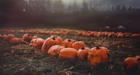 Fun Things to Do in Delaware County PA and Surrounding Areas this Weekend 10/9 – 10/11