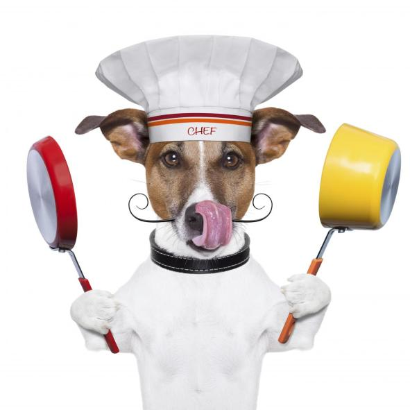 istockphoto_thinkstock_dog_chef