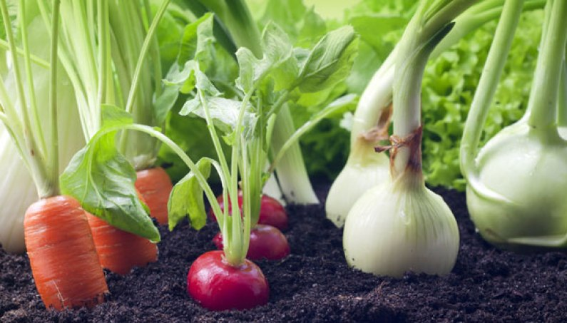 organic-farm-business-plan