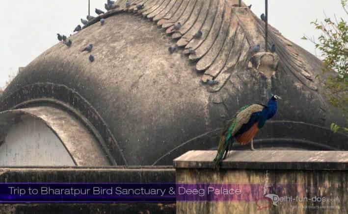 Bharatpur Bird Sanctuary and Deeg Palace