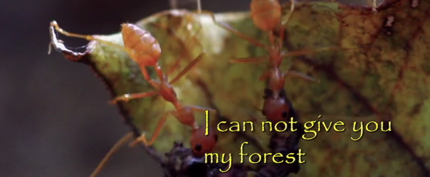 I Cannot Give You My Forest – Fight for Rights