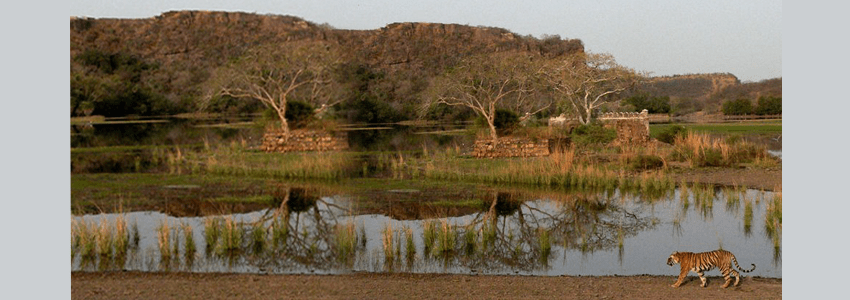 A Visit To Ranthambore National Park
