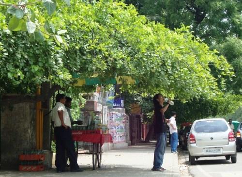 City Needs Trees?