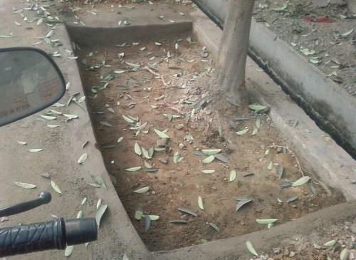 Blog IMPACT: Students Use RTI to Dechoke Trees