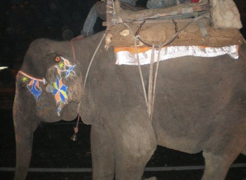 Bhola Appeals to Restore Pride and Safety of the Indian Elephant