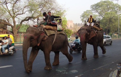 IWC's Online Monthly Chat on 'Human-Elephant Conflcit'