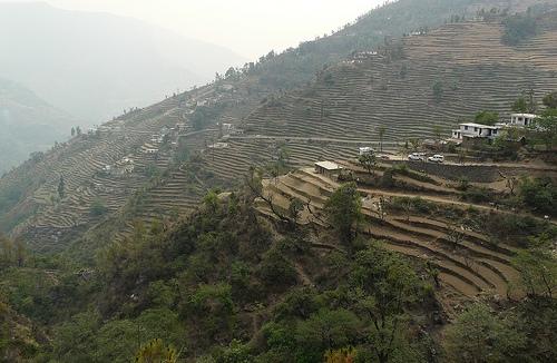 uttarakhand terrace farming