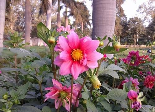 Invite to Flower Show and Antardhvani 2014 at University of Delhi