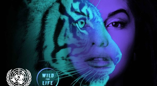 Join Jacqueline Fernandez in Her Fight to Protect the Tiger