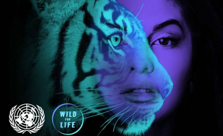 save-jacqueline-save-tiger
