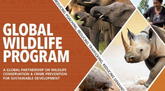 India to Host Global Wildlife Program to Address Illegal Wildlife Trade