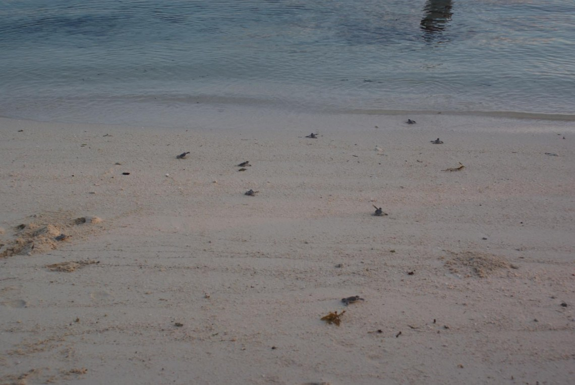 Mabul Turtle hatchery