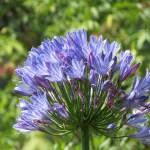 Munnar flowers