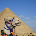 Great pyramind of Giza behind a camel